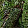 Cataracts Canyon Mossy Log  by Blake Richards