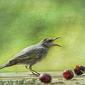 Catbird Eating Cherries by Susan Capuano