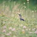Catbird In The Wildflowers by Kerri Farley