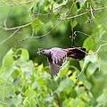 Catbird by Travis Truelove