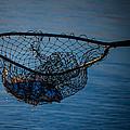 Catch Of The Day by Mechala Matthews