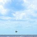 Catching Air by Tara Potts