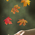 Catching Leaves by Amanda Elwell