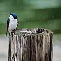 Catching Raindrops by Jai Johnson