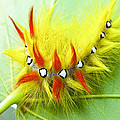 Caterpillar 2 by Ingrid Smith-Johnsen