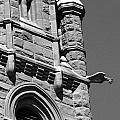 Cathedral Of The Madeleine Gargoyle by Tarey Potter
