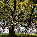 Cathedral Square - Exeter by Susie Peek