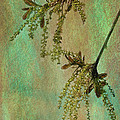 Catkins -- Tree-flowers by Judi Bagwell