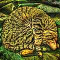 Catnappin' On A Cold Rainy Sunday by Randy Forrester