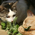 Catnip Anyone by Kevin Snider
