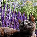 Cats 56 by Joyce StJames