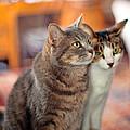 Cats by Dan McManus