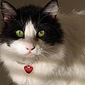 Cat's Eye by Karen Zuk Rosenblatt
