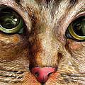Cat's Eye by Naushad  Waheed