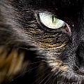 Cats Eye by Tim Hester