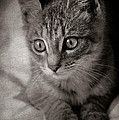 Cat's Eyes #05 by Loriental Photography
