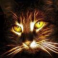 Cat's Eyes - Fractal by Lilia D