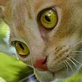 Cats Eyes by Jenny Setchell
