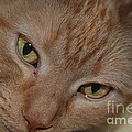 Cat's Eyes by Mark McReynolds