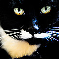 Cats Eyes by Ronda Broatch