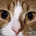 Cats Face by David Davis