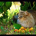 Cat's Mountain Summer by Susanne Still