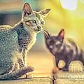 cat by Nuriyah