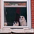 Cats On A Sill by Randi Shenkman