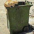 Cats On And In Garbage Container by Patricia Hofmeester