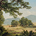 Catskill Meadows In Summer by Asher Brown Durand