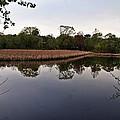 Cattail Swamp I by Joe Faherty
