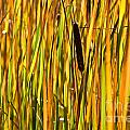 Cattails Aflame by Cheryl Baxter