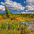 Cattails And Clouds by Steve Harrington