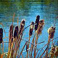 Cattails by Cassie Peters