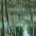 Cattails On Green by Photographic Arts And Design Studio