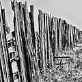 Cattle Fence By Diana Sainz by Diana Raquel Sainz