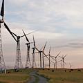 Cattle Graze In Field Next To Windmills by Henry Georgi