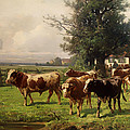 Cattle Heading To Pasture by Mountain Dreams