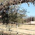 Cattle Ramp by David S Reynolds