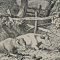 Cattle Resting by Robert Hills
