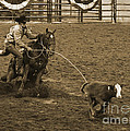 Cattle Roping In Colorado by Janice Pariza