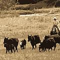 Cattle Round Up Sepia by Athena Mckinzie