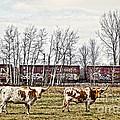 Cattle Train by Ms Judi