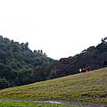 Cattles At Fernandez Ranch California - 5d21106 by Wingsdomain Art and Photography