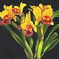 Cattleya Orchid by Richard Harpum