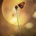 Caught In The Sun by Jaroslaw Blaminsky