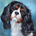 Cavalier King Charles Spaniel by Hope Lane