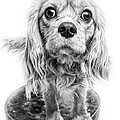 Cavalier King Charles Spaniel Puppy Dog Portrait by Edward Fielding