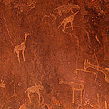 Cave Paintings By Bushmen, Damaraland by Panoramic Images