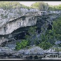 Caves In The Bahamas by Robert Nickologianis